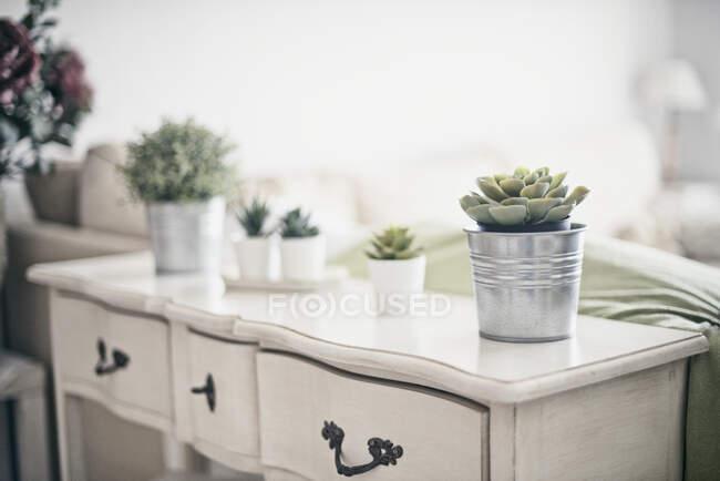 Сусідні рослини на буфеті у вітальні. — стокове фото