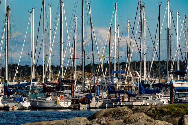 Sailing boats in a marina with Mt Baker in the distance, Vancouver Island, British Columbia, Canada — Stock Photo