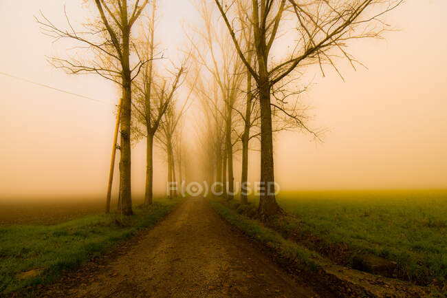 Strada alberata nebbia, Alessandria, Piemonte, Italia — Foto stock
