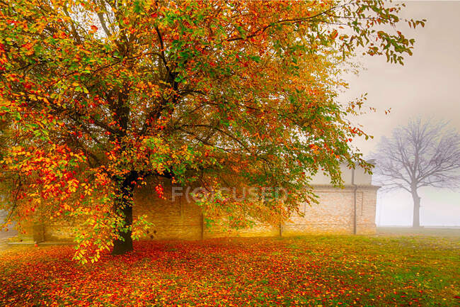 Autumn tree, Alessandria, Piedmont, Italy — Stock Photo