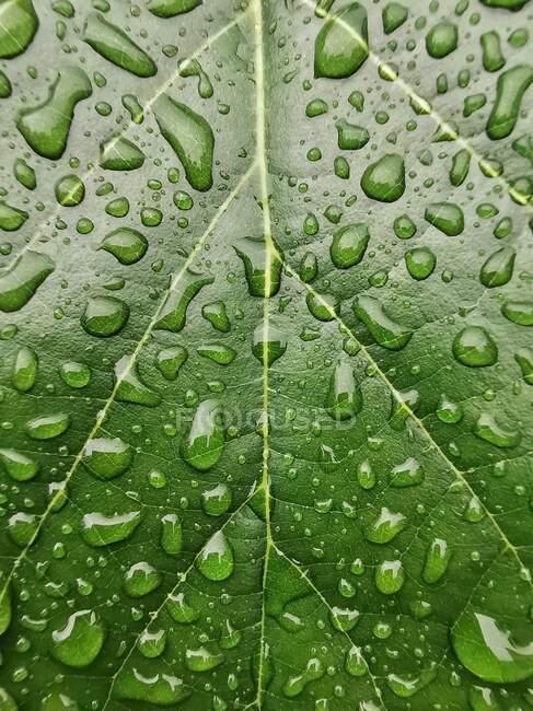 Крупный план капель воды на листе — стоковое фото