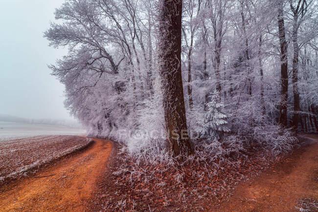 Chemin à travers une forêt gelée, Remetschwil, Argovie, Suisse — Photo de stock