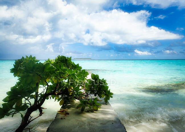 Albero adagiato su un molo sulla spiaggia tropicale, Rannalhi, Atollo maschio meridionale, Maldive — Foto stock
