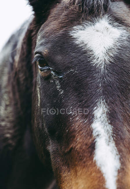 Close-up of a Horse head, Riseley, Berkshire, England, UK — Stock Photo