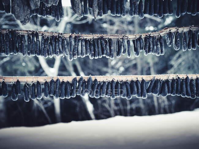 Saucisses suspendues sur un rack dans la neige, Bulgarie — Photo de stock