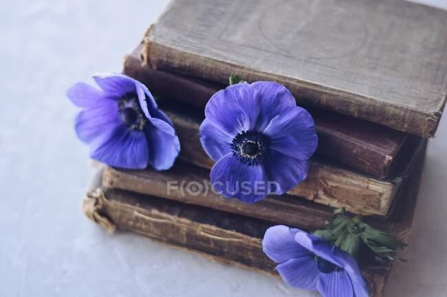 Куча старых книг и цветков анемонов — стоковое фото
