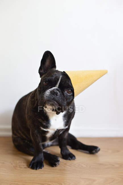Bulldog francés con sombrero de fiesta - foto de stock