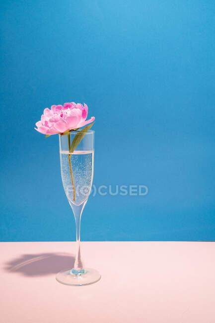 Peonía rosa en una copa de champán - foto de stock