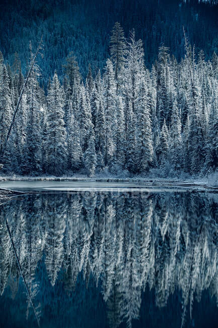 Trees reflected in Emerald Lake, Banff National Park, Alberta, Canada — Stock Photo