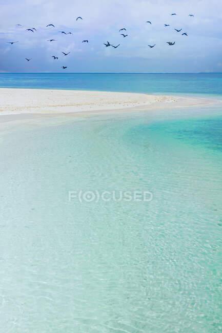 Bandada de aves volando sobre una playa tropical, Nueva Caledonia - foto de stock