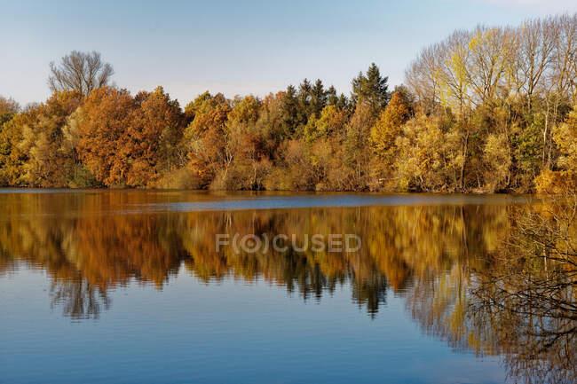 Lago arbolado en otoño, Frisia Oriental, Baja Sajonia, Alemania - foto de stock