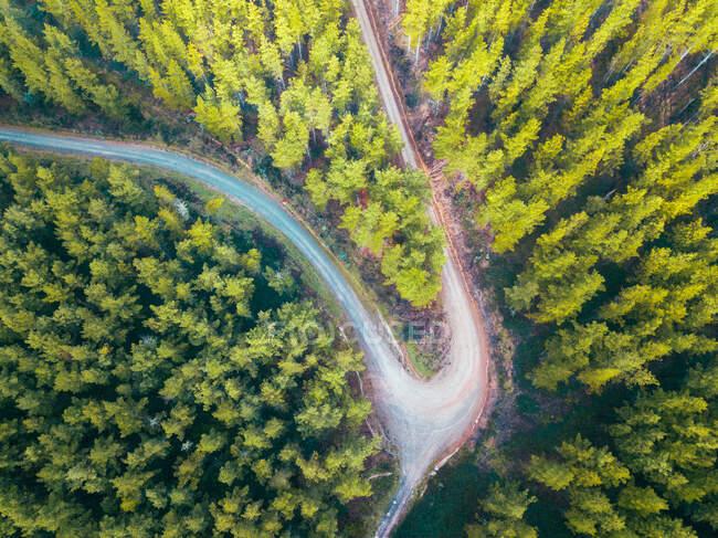 Veduta aerea di una strada attraverso una foresta alpina, Mount Buffalo National Park, Myrtelford, Victoria, Australia — Foto stock