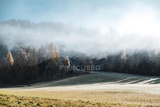 Облака над лесным пейзажем в Австрийских Альпах, Filzmoos, Зальцбург, Австрия — стоковое фото