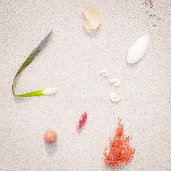 Морские ракушки, кораллы и водоросли на пляже, Австралия — стоковое фото