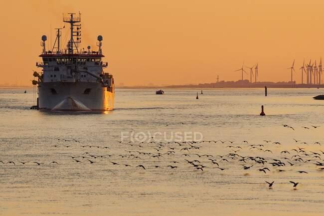 Manada de gansos de barnacla que despegan en el río Ems cuando un barco se acerca al atardecer, Frisia Oriental, Baja Sajonia, Alemania - foto de stock