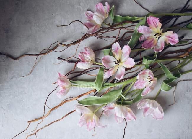 Красивые белые тюльпаны и веточки на светлой поверхности — стоковое фото
