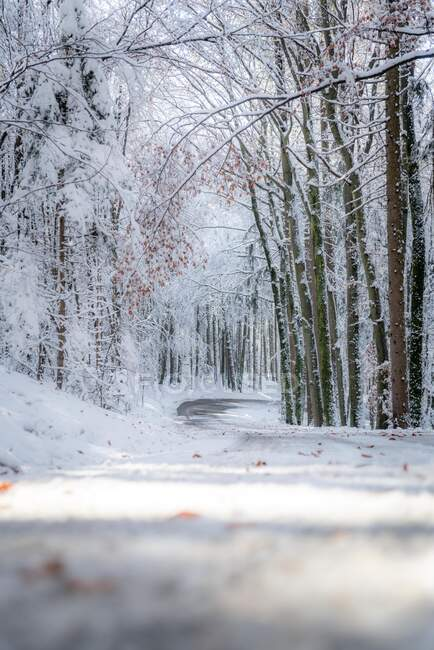 Strada innevata che si snoda attraverso la foresta invernale, Salisburgo, Austria — Foto stock