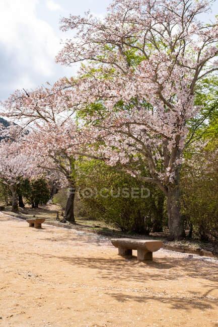 Flor de cerezo, Arashiyama, Kioto, Japón - foto de stock