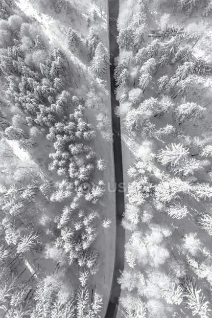 Vista aérea de uma estrada através da floresta coberta de neve, Gaisberg, Salzburgo, Áustria — Fotografia de Stock
