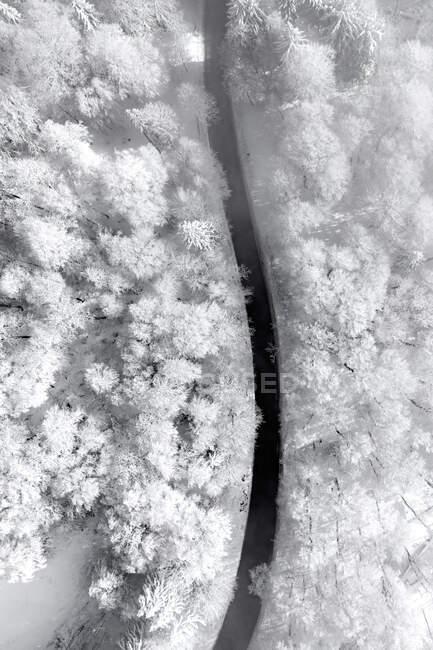 Vista aérea de una carretera a través de un bosque alpino cubierto de nieve, Gaisberg, Salzburgo, Austria - foto de stock