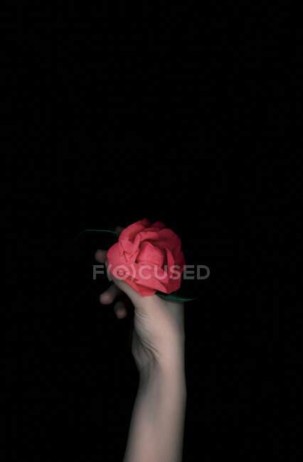 Mão de mulher segurando uma rosa vermelha — Fotografia de Stock