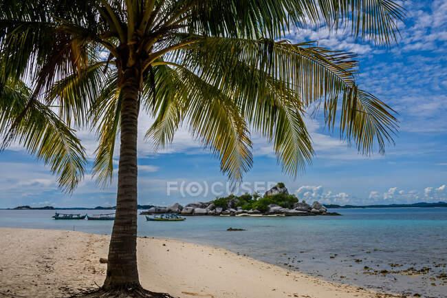 Bella spiaggia tropicale con palme e cielo blu — Foto stock