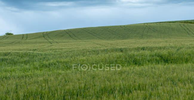 Paysage rural, Toscane, Italie — Photo de stock