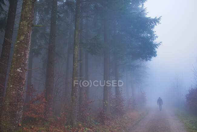 Rear view of a man walking along a footpath in the fog, Switzerland — Stock Photo
