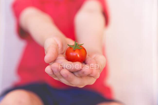 Boy holding a tomato — Stock Photo