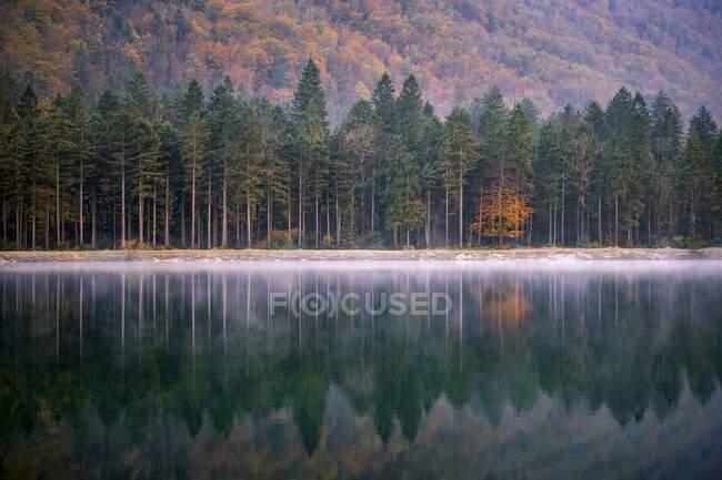 Лісові роздуми в Рейді в Австрійських Альпах, Бад-Гаштайні, Зальцбург, Австрія — стокове фото