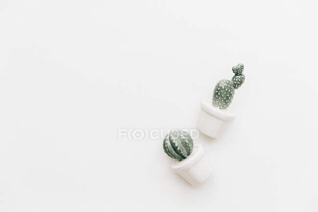 Overhead view of Two ceramic cacti — Stock Photo