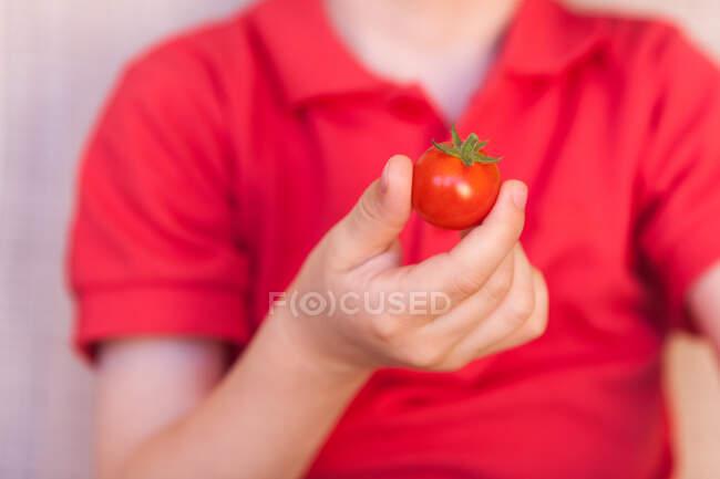 Niño sosteniendo un tomate - foto de stock