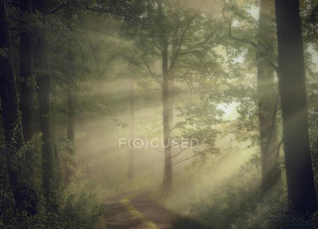 Strada attraverso una foresta illuminata dal sole, Italia — Foto stock