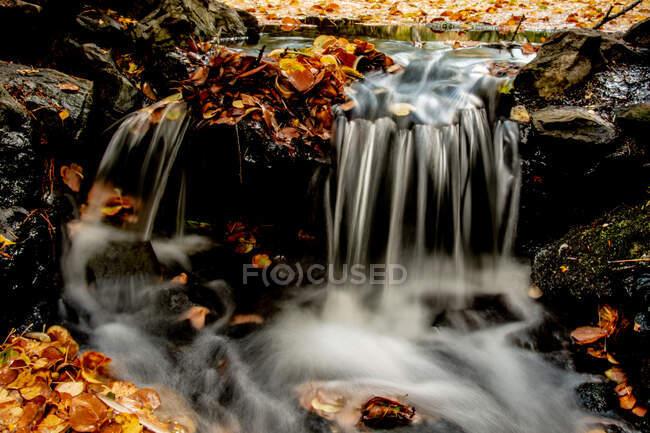 Larga exposición de hojas de otoño en un arroyo, Columbia Británica, Canadá - foto de stock