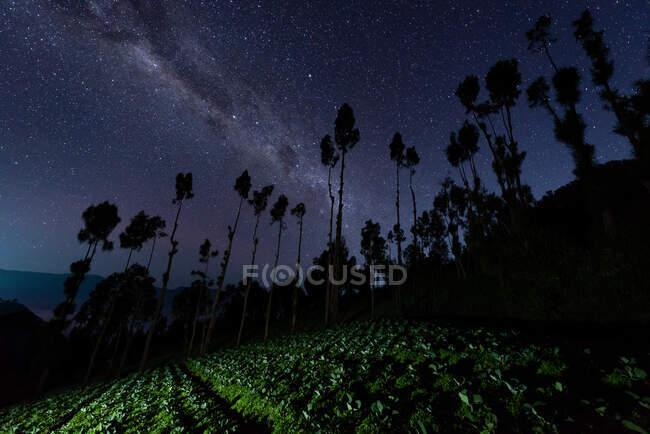 Vía Láctea sobre un campo de repollo cerca del Monte Bromo, Java Oriental, Indonesia - foto de stock