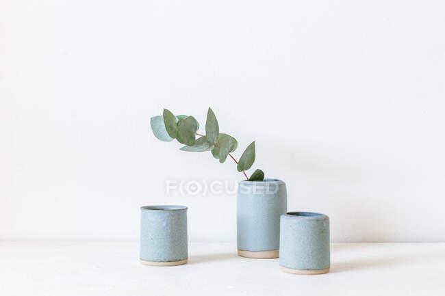 Eucalipto en un jarrón de cerámica - foto de stock