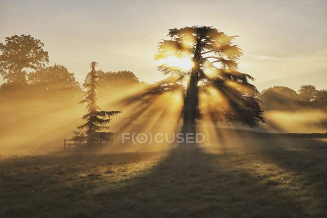 Sunlight through the trees, Farley Hill, Berkshire, Regno Unito — Foto stock