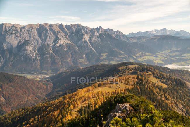 Larch tree forest in the Austrian Alps, Salzburg, Austria — Stock Photo