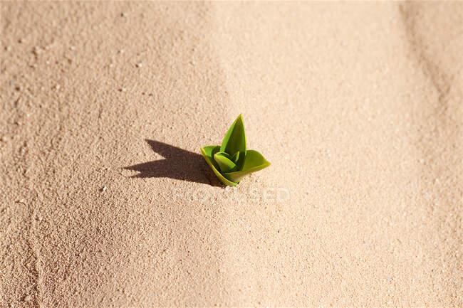 Vista aérea de una planta que crece en el desierto, Jordania - foto de stock