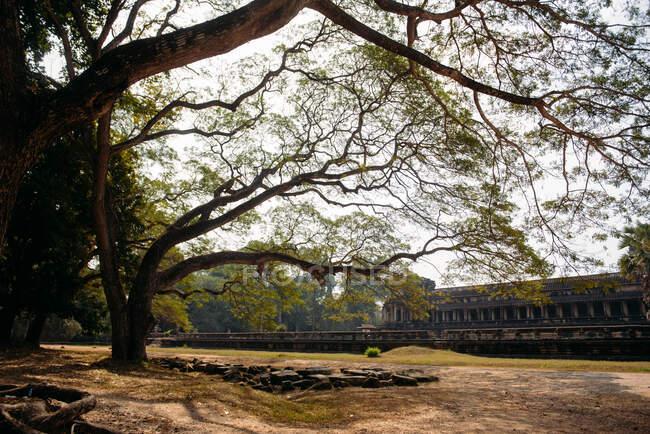 Temple ruins, Angkor Wat, Siem Reap, Cambodia — Stock Photo