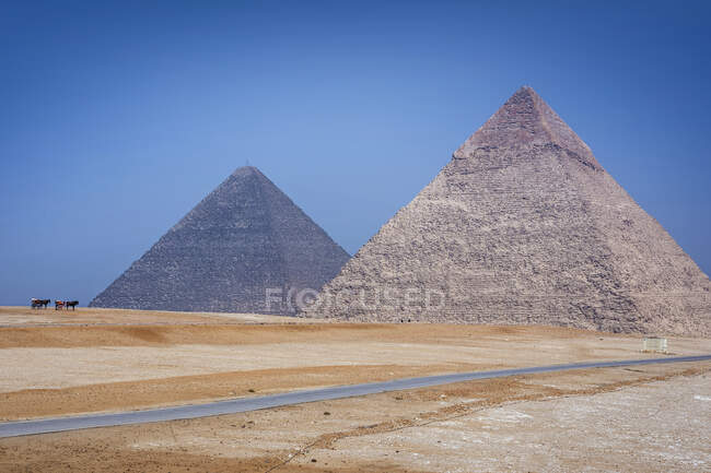 Horses standing by Giza pyramid complex near Cairo, Egypt — стокове фото