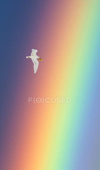 Paloma volando junto a un arco iris llevando una rama de olivo en su boca, Estados Unidos - foto de stock