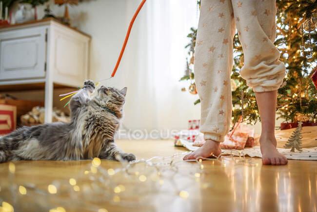 Ragazza in piedi vicino a un albero di Natale che gioca con il suo gatto — Foto stock