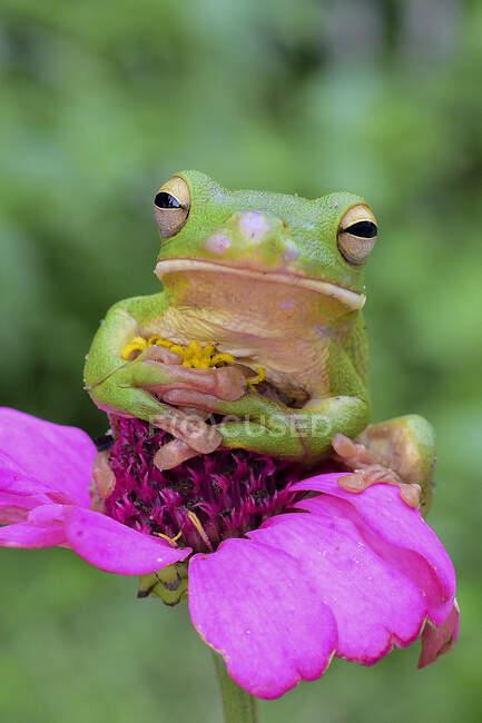 Rana en hermosas flores que crecen al aire libre, concepto de verano, vista cercana - foto de stock