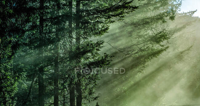 Вражаючий вид безконечного лісу в сонячний день. — стокове фото
