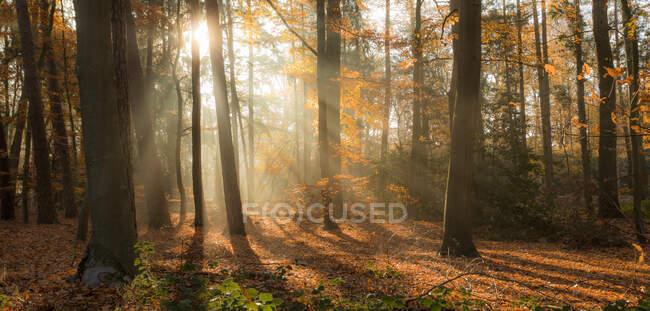 Pintoresca vista del interminable bosque otoñal en un día soleado - foto de stock