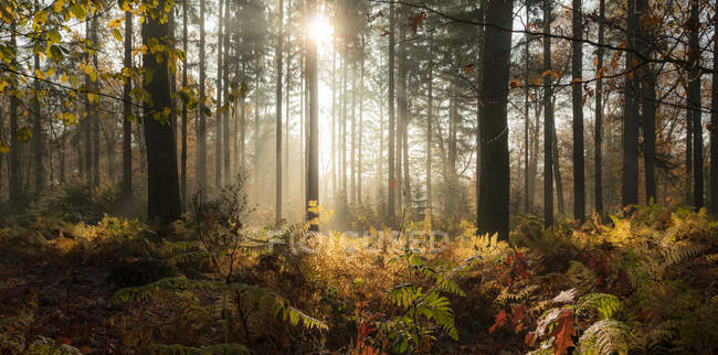 Picturesque view of endless autumn forest at sunny day — Stock Photo