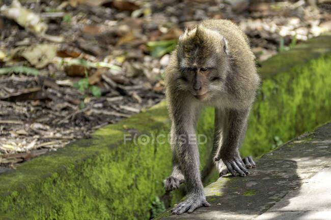 Un primer plano de un mono bebé lindo en una roca - foto de stock