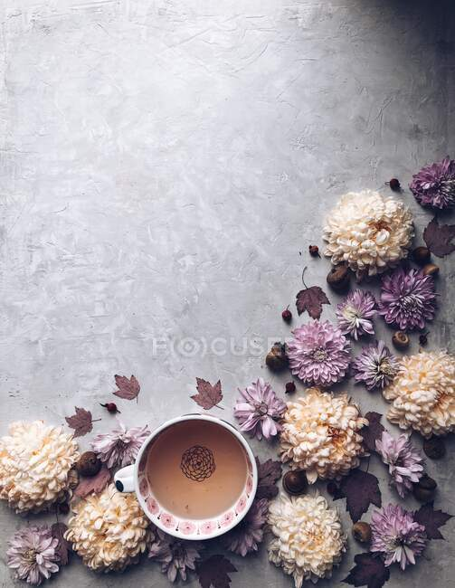 Chrysanthemum flowers and a cup of herbal tea — Stock Photo