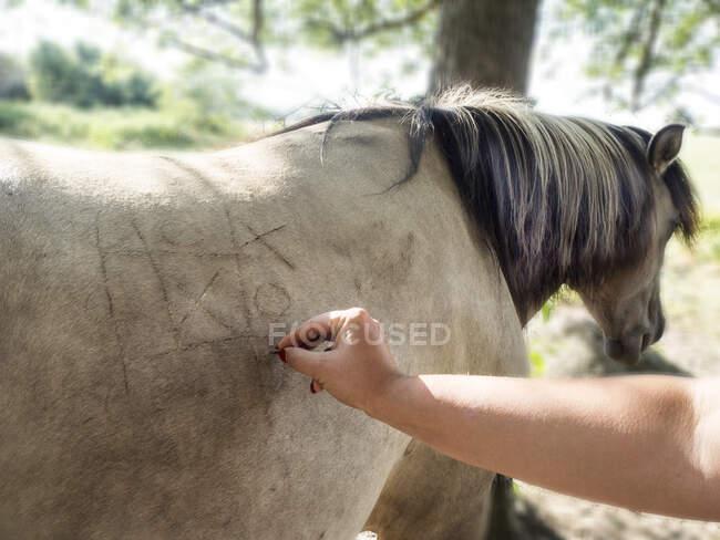 Mulher jogando nuances e cruzes em um cavalo de volta, Polônia — Fotografia de Stock